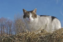 Cat on haystack Stock Image