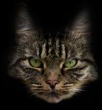Cat head royalty free stock photography