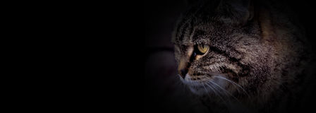 The cat head with black background Royalty Free Stock Photos