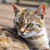Cat head brigh colours. Cat head with soft background bright colours Stock Images