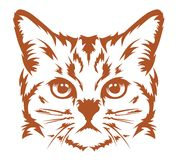 Cat head cool Royalty Free Stock Images