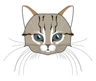 Cat head. Face kitten, whisker and ear, muzzle and wool. Vector illustration Stock Photos