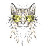 Cat.  head, glasses,. Cat head, glasses Stock Images