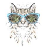 Cat head, glasses,. Set icon Stock Images