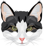 Cat head isolated on white. Illustration Stock Images