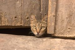 Cat head in Kairouan Royalty Free Stock Photography