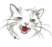 Cat head. Line drawing of the head cat, white background Royalty Free Stock Images