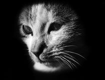 Cat Head logo. Abstract logo with a cat head in black&white Royalty Free Stock Photo