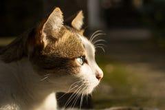 Cat head. Cat look forward to  the sun Royalty Free Stock Photos