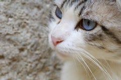 Cat head Stock Images