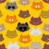 Cat head pattern. Pet background. Ornament face Kitty. Vector il. Lustration Royalty Free Stock Photography