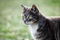 Cat head portrait in profile Royalty Free Stock Photography