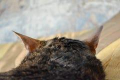 Cat head rear view Royalty Free Stock Photos