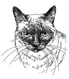 Cat head vector hand drawing illustration. Siamese Cat head vector hand drawing illustration Stock Images
