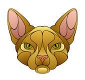 Cat head Royalty Free Stock Photos