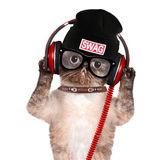 Cat headphones. Isolated on white Royalty Free Stock Photography