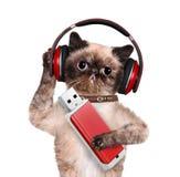 Cat headphones. Stock Images
