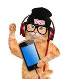 Cat in headphones. Stock Images