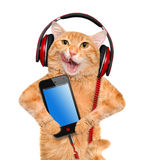 Cat headphones. Royalty Free Stock Images