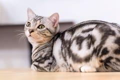 Cat Health Fotografie Stock Libere da Diritti