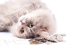 Cat and heap of coins Stock Photo