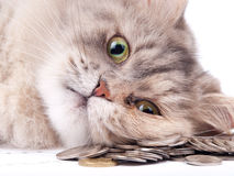 Cat and heap of coins Stock Photography