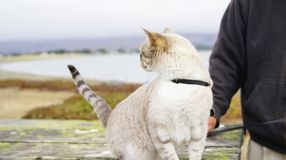 Cat Hearing Danger alerta imagem de stock royalty free
