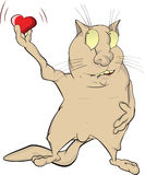 Cat and heart Stock Photos