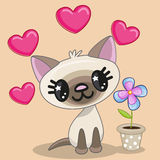 Cat with heart and flower Stock Image