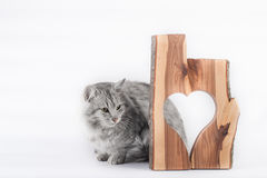 Cat and heart. Grey cat and a wooden heart on a white background royalty free stock photo