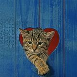 Cat in heart hole Stock Image