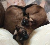 Cat heart royalty free stock photography