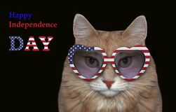 Cat in sunglasses on a black royalty free stock image