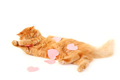 Cat in heart valentines feels tired of declaration of love. Isolated on white background Stock Photos