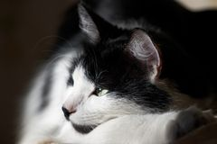 The cat heated on the sun. On summer evening Stock Photo