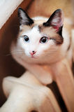 Cat on a heating radiator Stock Images