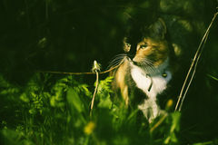 Cat in a hedge Stock Photo