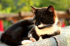 Cat On Heet Tin Roof in Zonsondergang Royalty-vrije Stock Afbeelding