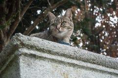 cat  in Height looks away Stock Photo