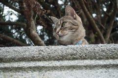 Cat  in Height looks away Stock Image