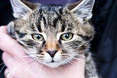 Cat held in hand stock image
