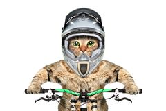 Cat in a helmet on a bicycle stock photo