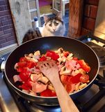 Cat helping with cooking Stock Images
