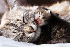 Cat and her kitten Stock Photos