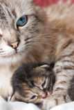 Cat and her kitten royalty free stock photography
