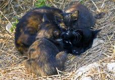 Cat and her kitten Stock Photo