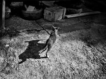 Cat and her shadow in monotone. Cat with fish in mouth and her shadow in monotone Royalty Free Stock Image