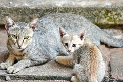 Cat with her young kitten sitting close together Stock Photo