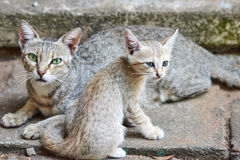 Cat with her young kitten sitting close together Stock Images