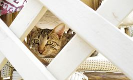 Cat hid and looks out. From under the fence royalty free stock image
